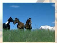 Игра Horses