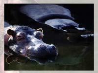 Игра Hippo