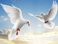 Ігра Flying Birds