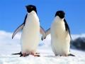Игра Penguin Puzzle
