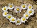 Ігра Daisy Heart Jigsaw