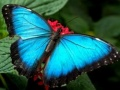 Ігра Nature Jigsaw Puzzle Butterfly