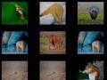 Игра Animal Memory